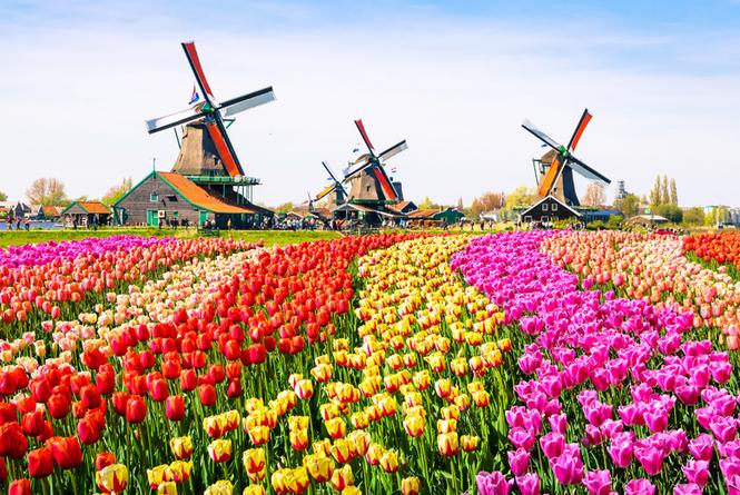 """Vaizdo rezultatas pagal užklausą """"olandija keukenhofo sodas"""""""